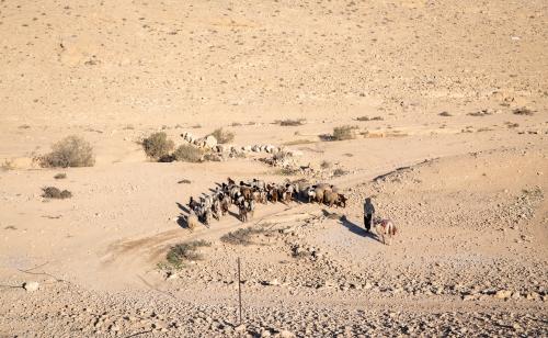 Bedouin sheepherder, Negev Desert